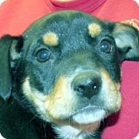 Adopt A Pet :: Aja - Germantown, MD