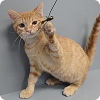 Adopt A Pet :: Rupert - Seguin, TX