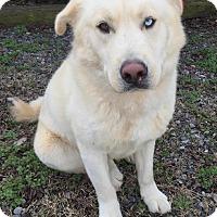 Adopt A Pet :: Fuzzy - Westport, CT