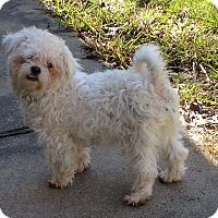Adopt A Pet :: Perry - Westport, CT