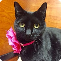 Adopt A Pet :: Tickles - Long Beach, NY