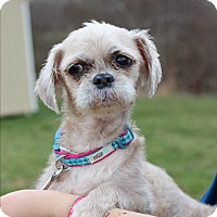 Adopt A Pet :: Busy - Waldorf, MD
