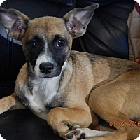 Adopt A Pet :: Robin (16 lb) Fun, Loving, Active Dog! - SUSSEX, NJ