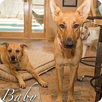 Adopt A Pet :: Baby - Phoenix, AZ