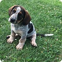 Adopt A Pet :: Fleur - New Oxford, PA