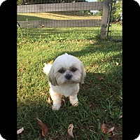 Adopt A Pet :: Bella - LEXINGTON, KY
