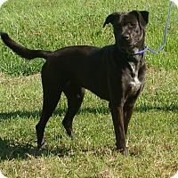 Adopt A Pet :: Chelsea - Cameron, MO