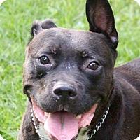Adopt A Pet :: YAGO - Bolingbrook, IL