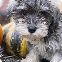 Adopt A Pet :: Annelle - St. Louis Park, MN