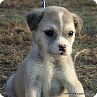 Adopt A Pet :: BOOMER/ADOPTED - PRINCETON, KY