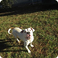Adopt A Pet :: Samantha - Georgetown, SC