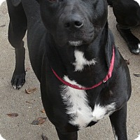 Adopt A Pet :: Mallory - Wellesley, MA
