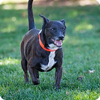Adopt A Pet :: Peanut - Washoe Valley, NV