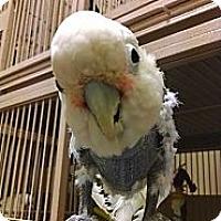 Adopt A Pet :: Bebe - Punta Gorda, FL
