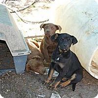 Adopt A Pet :: Mika - Worcester, MA