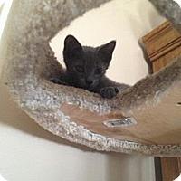 Adopt A Pet :: Smokey - Island Park, NY