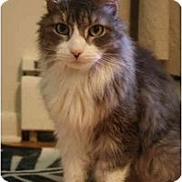 Adopt A Pet :: Gus  (cm) - Little Falls, NJ