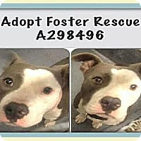 Adopt A Pet :: A298496 Jade - San Antonio, TX