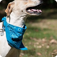 Adopt A Pet :: Zander - Lewisville, IN