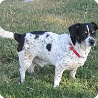 Adopt A Pet :: Snoopy - Copperas Cove, TX