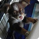 Adopt A Pet :: Pop