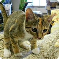 Adopt A Pet :: Hazel - Chesapeake, VA