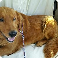 Adopt A Pet :: Rusty - Brattleboro, VT