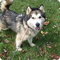 Adopt A Pet :: Colt - Augusta County, VA