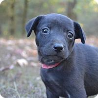 Adopt A Pet :: Millie - Charlemont, MA