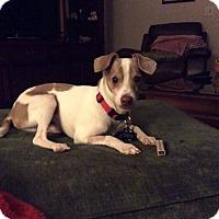 Adopt A Pet :: Kobe - Windermere, FL