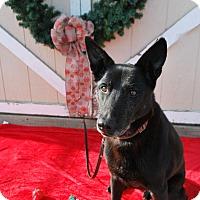 Adopt A Pet :: Ross - Berea, OH
