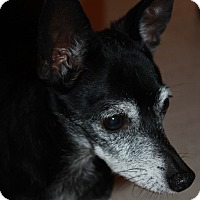 Adopt A Pet :: Scampi - Buckeye, AZ
