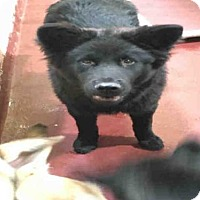 Adopt A Pet :: JERMAINE - Atlanta, GA