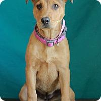 Adopt A Pet :: Charlotte II - Waldorf, MD