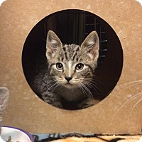 Adopt A Pet :: Kieran - East Brunswick, NJ