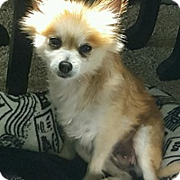 Adopt A Pet :: Versa - Waldorf, MD