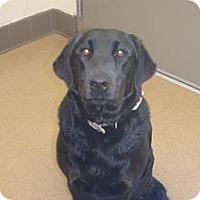 Adopt A Pet :: Abby Mae - Las Vegas, NV