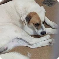Adopt A Pet :: Bernie - Las Vegas, NV