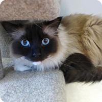Adopt A Pet :: Teddy 33029952 - Westampton, NJ