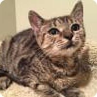 Adopt A Pet :: Jessica - East Hanover, NJ