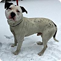 Adopt A Pet :: Turbo - Mt. Pleasant, MI