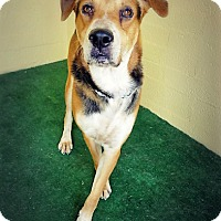 Adopt A Pet :: Zeuz - Casa Grande, AZ