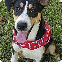 Hound (Unknown Type) Mix Dog for adoption in San Leon, Texas - Bodie