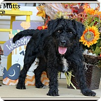 Adopt A Pet :: Ace - Dixon, KY