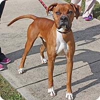 Adopt A Pet :: Kenny - Harrisonburg, VA