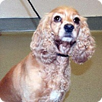 Adopt A Pet :: Lady - Wildomar, CA