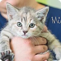 Adopt A Pet :: Mia - Somerset, PA