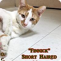 Adopt A Pet :: H-6 Finnick - Triadelphia, WV