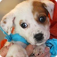 Adopt A Pet :: George - West Grove, PA
