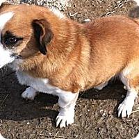 Adopt A Pet :: Petie - Hazard, KY